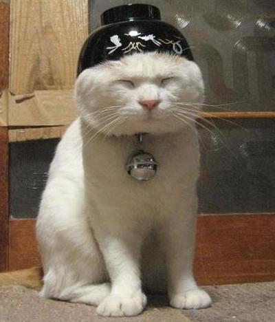 cat_bowl_on_head.jpg