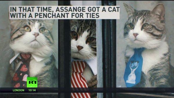 Julian Assange cat 3.jpg