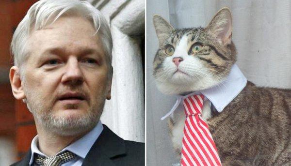 Julian Assange cat.jpg