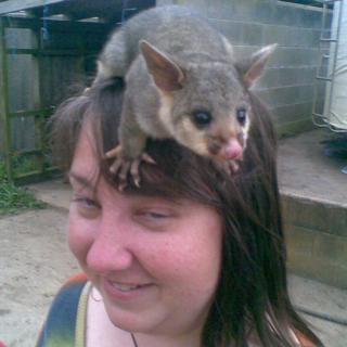 mel-possum-head.png