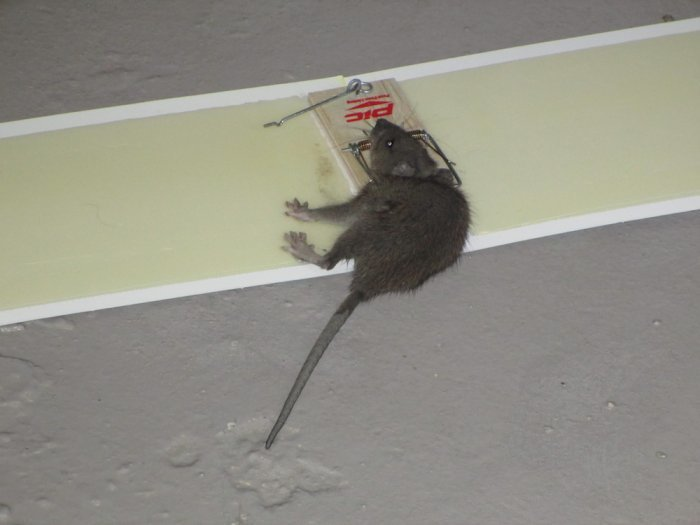 mousecaught.JPG
