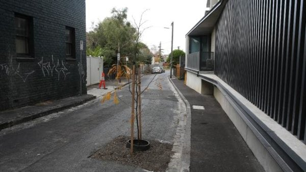 Tree in road.jpg